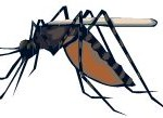 Traveling? Don't Forget Malaria Pills