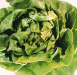Smokers, Eat Your Spinach! It May Fight Off Cancer