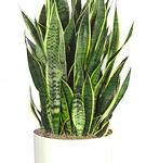 Indoor Plants: Natural Air Purifiers